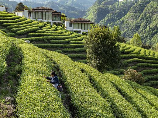Voyages événements – L'Empire du thé