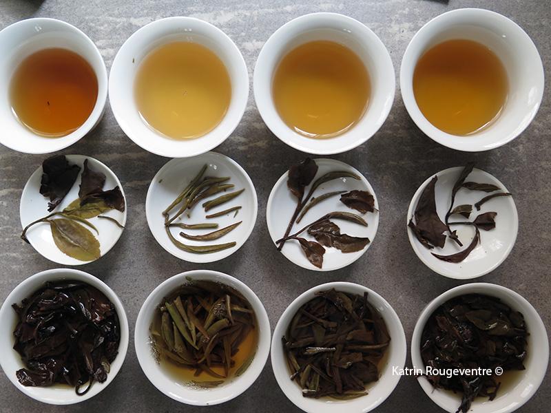 les couleurs du thé
